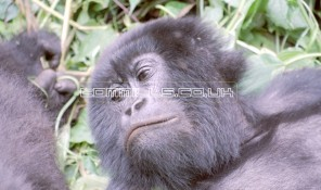 africa0102.tif